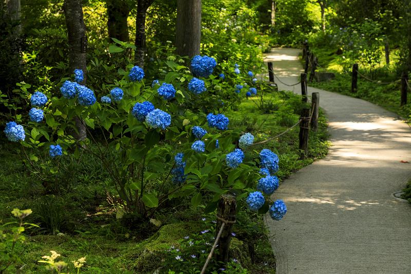 初夏の花咲く三千院_f0155048_23343513.jpg