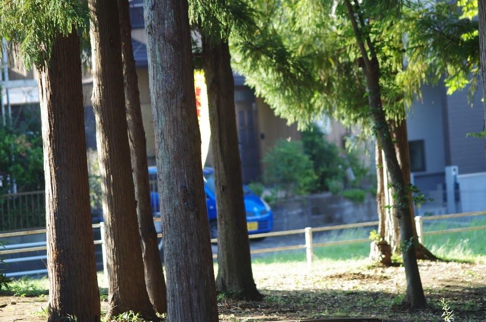 近くの公園_e0117266_01481173.jpg