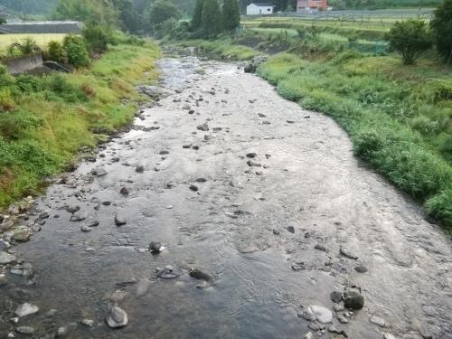2020/8/26     水位観測  (槻の木橋より)_b0111189_05591105.jpg