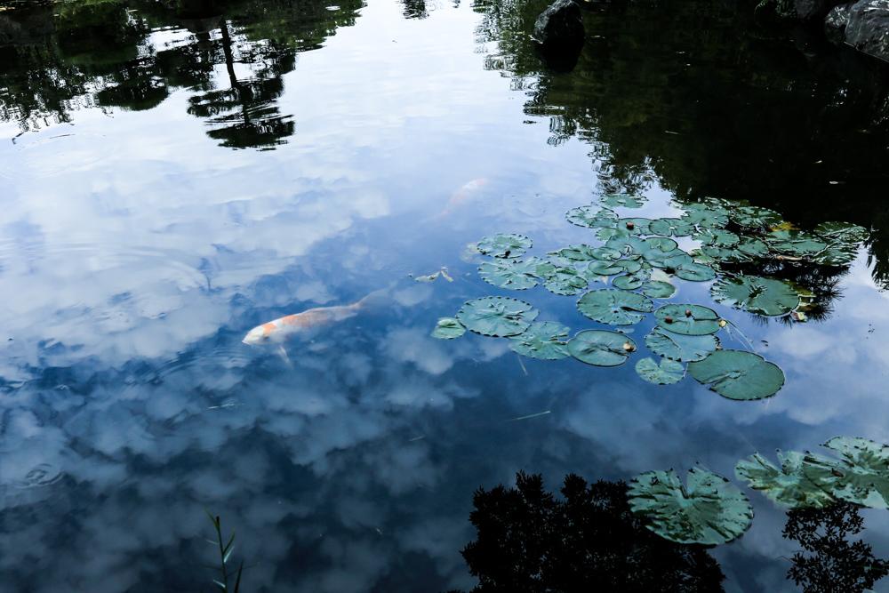 空を泳ぐ_c0252695_10120540.jpg