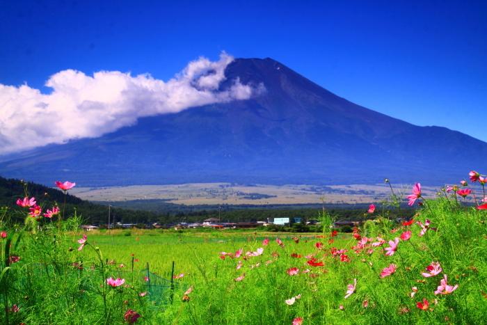 令和2年8月の富士(6) 忍野の夏雲の富士 _e0344396_18050974.jpg