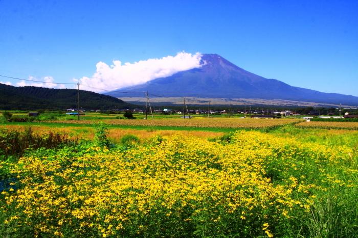 令和2年8月の富士(6) 忍野の夏雲の富士 _e0344396_18052081.jpg