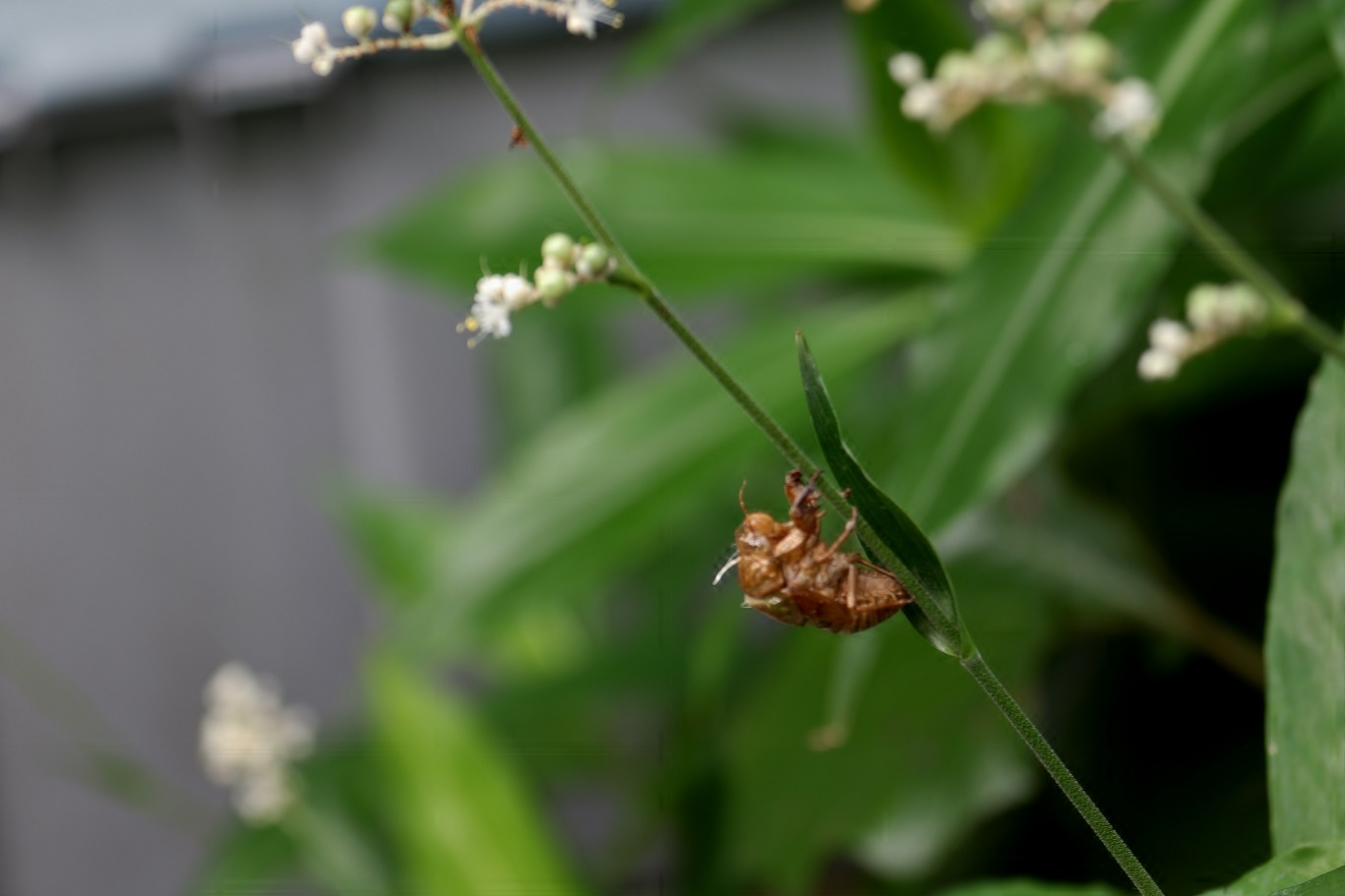 夏の匂い     <   我が家の庭   >_a0140000_09363758.jpg