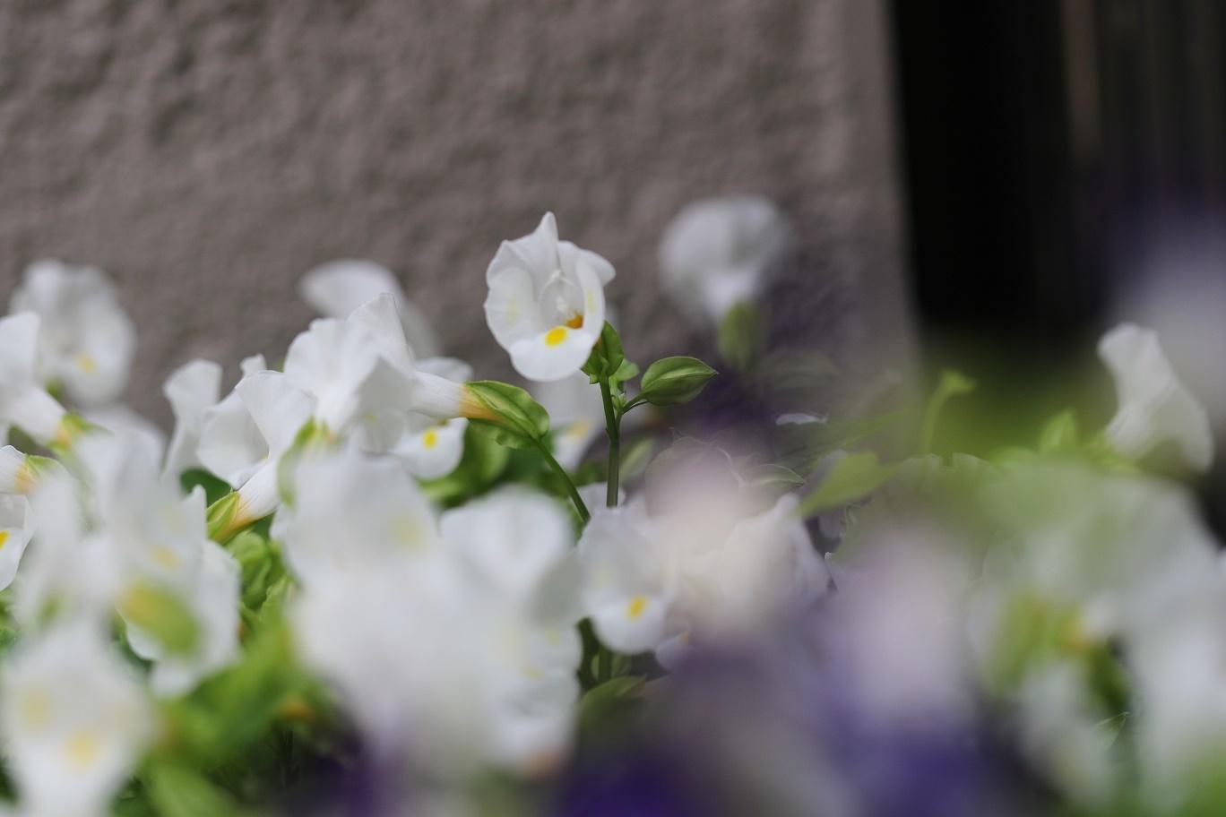 夏の匂い     <   我が家の庭   >_a0140000_09545212.jpg