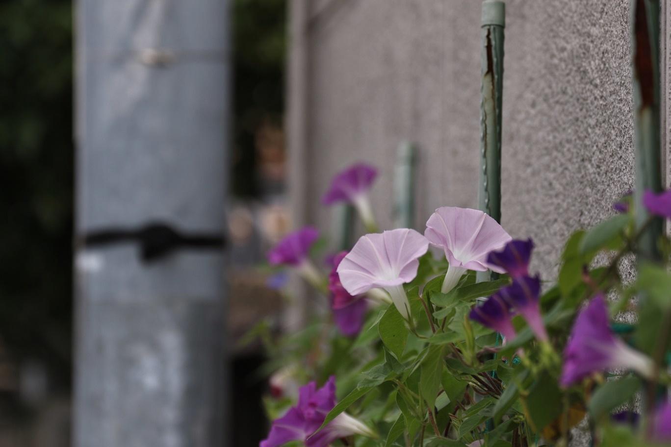 夏の匂い     <   我が家の庭   >_a0140000_09564667.jpg