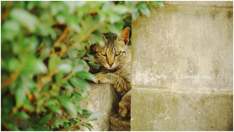 """過去猫 \""""窺う\""""_f0302613_14003898.jpg"""