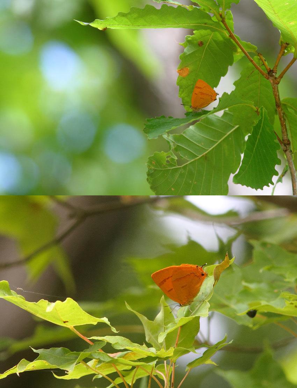"""8月27日""""深緑を彩るオレンジ""""_d0069235_13111873.jpg"""