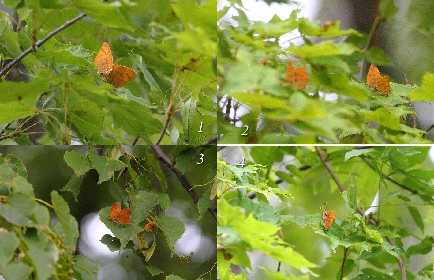 """8月27日""""深緑を彩るオレンジ""""_d0069235_13112702.jpg"""