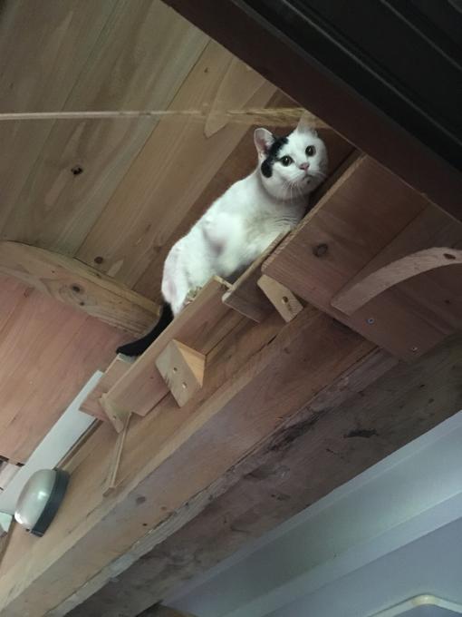 愛猫ももの為に_f0182246_18230333.jpg