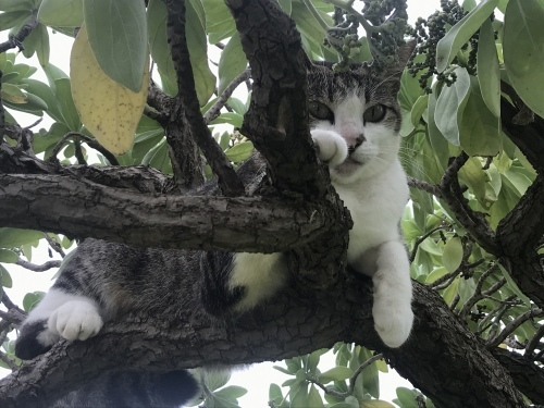 むぎ(猫)を撫で撫でしたい(^^)_c0193396_12051252.jpeg