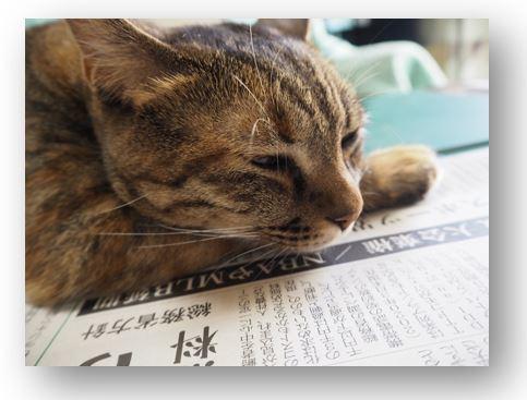 猫の事情_e0350905_10363695.jpg