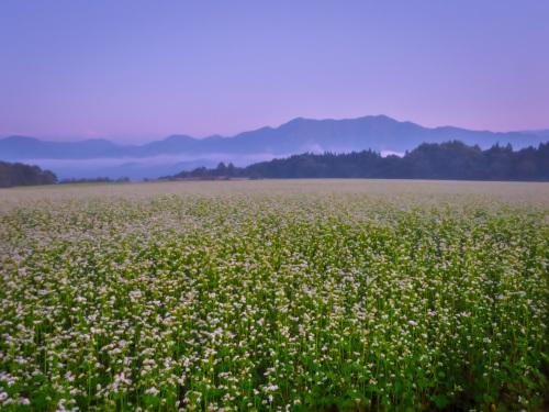 2020.8.27早朝の満開のそば畑(猿楽台地)_e0321032_16490266.jpg