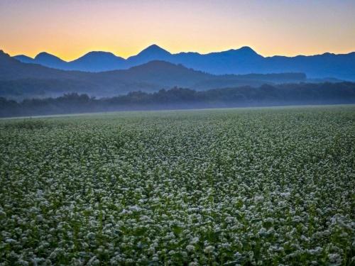 2020.8.27早朝の満開のそば畑(猿楽台地)_e0321032_16494144.jpg