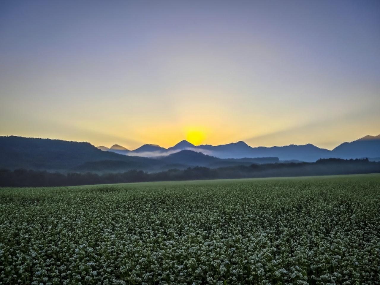 2020.8.27早朝の満開のそば畑(猿楽台地)_e0321032_16495721.jpg