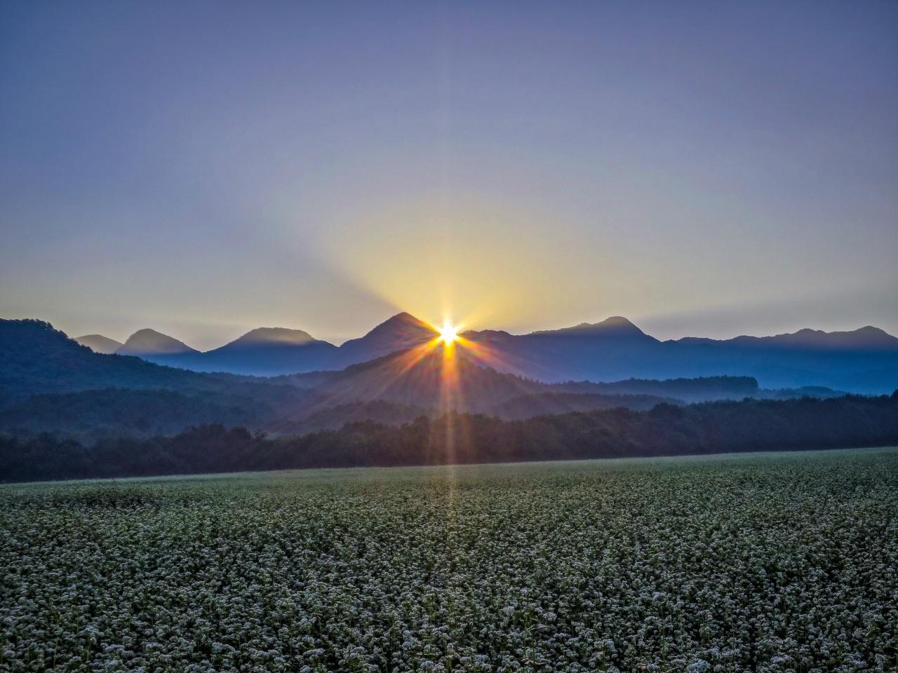 2020.8.27早朝の満開のそば畑(猿楽台地)_e0321032_16501526.jpg