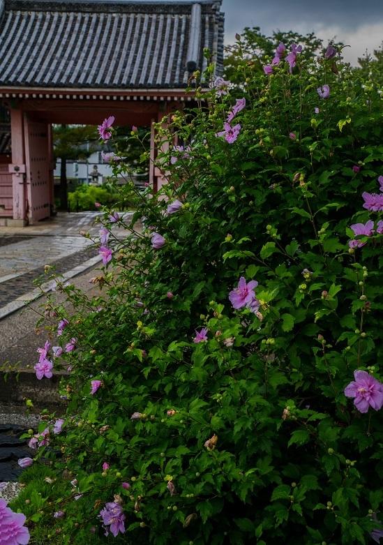 夏の真如堂_e0363038_18021785.jpg
