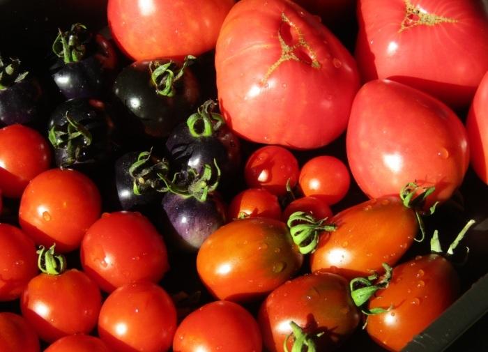 トマト いろいろ_b0287748_04384856.jpg