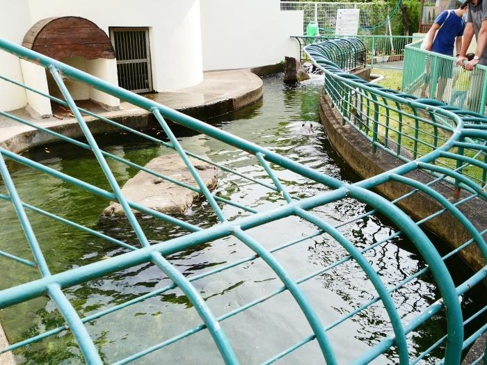 お城の動物園・アメリカビーバー  2020-09-02 00:00_b0093754_22451106.jpg