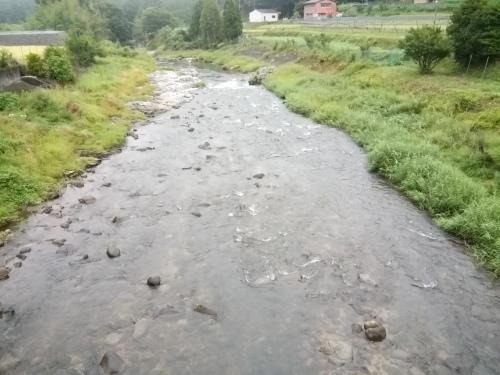 2020/8/29     水位観測  (槻の木橋より)_b0111189_05482851.jpg