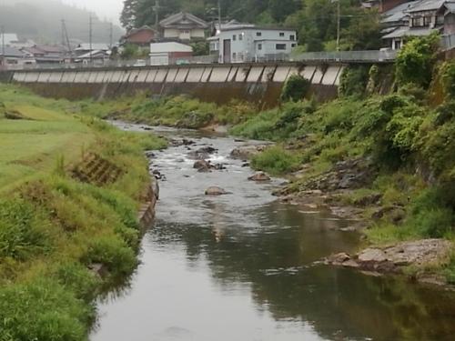 2020/8/29     水位観測  (槻の木橋より)_b0111189_05484336.jpg