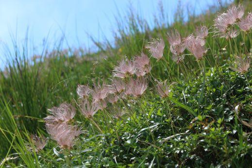 20200822 【八方尾根】高山植物は花盛り-その2_b0013099_17235582.jpg