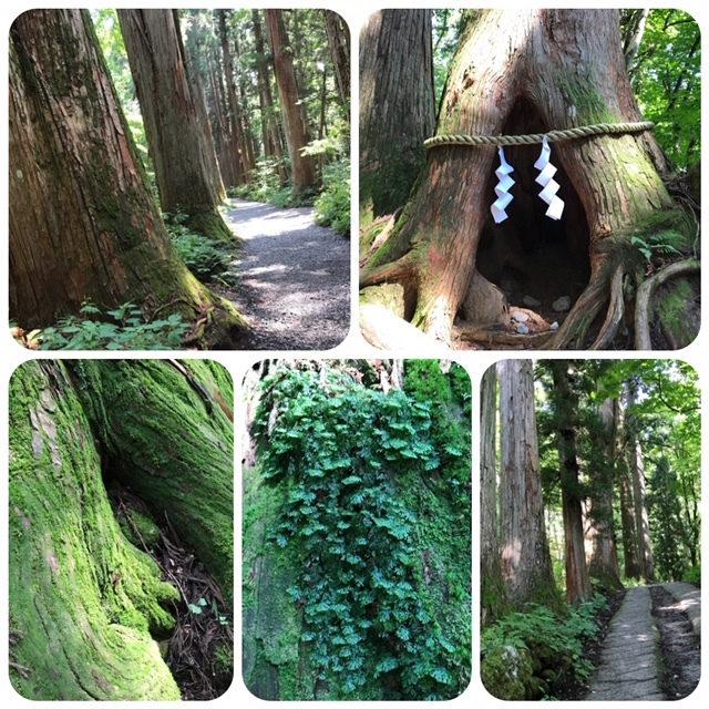 夏の戸隠神社へ_d0085018_21391970.jpg