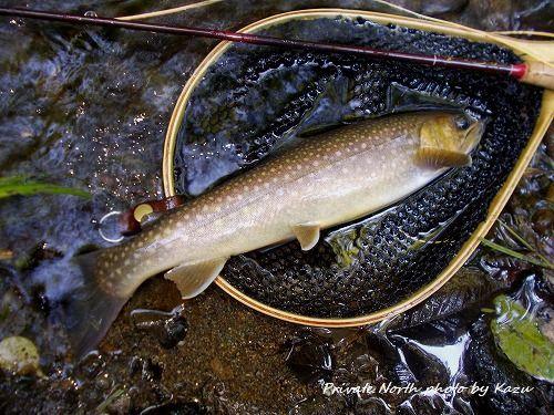 昨日の釣り_d0261148_17400152.jpg
