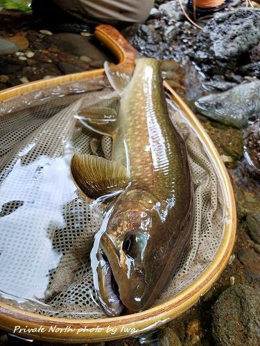 昨日の釣り_d0261148_18260716.jpg