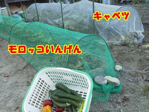 朝一番 畑コーディネーターのお仕事_a0331562_7592427.jpg