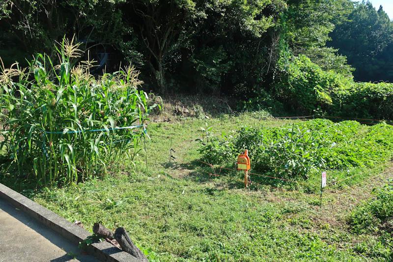 家庭菜園_d0127876_21253661.jpg