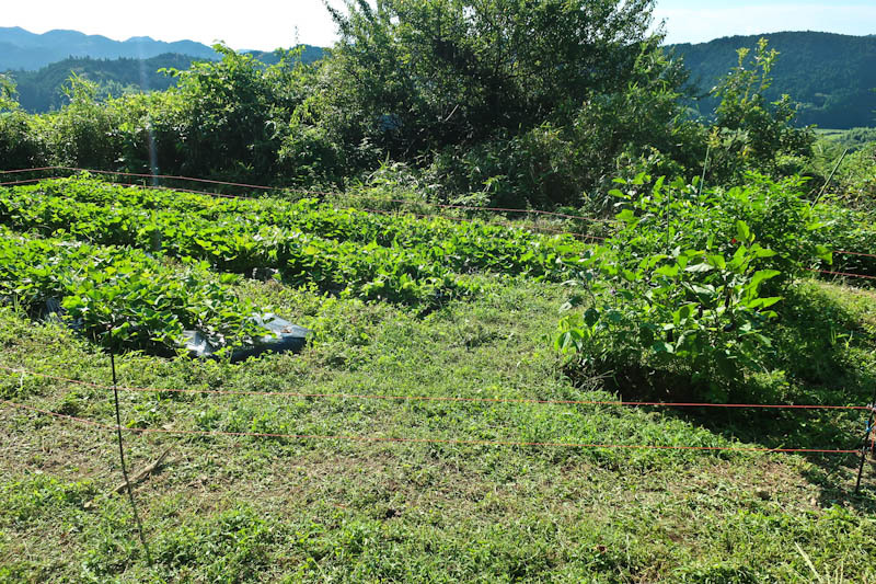 家庭菜園_d0127876_21253675.jpg