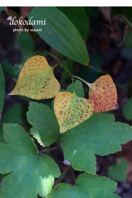 秋の色・・・と言いたいのですが_d0316986_2228443.jpg