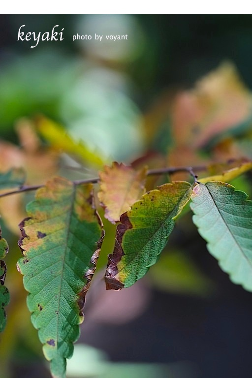 秋の色・・・と言いたいのですが_d0316986_22285781.jpg
