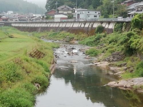 2020/8/30     水位観測  (槻の木橋より)_b0111189_05412339.jpg
