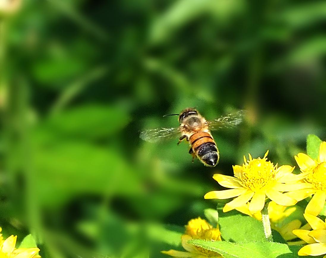 花バチ_e0254493_13345672.jpg