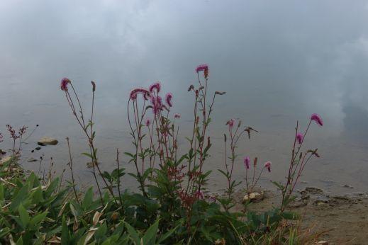 20200822 【八方尾根】高山植物は花盛り-その3_b0013099_17383248.jpg