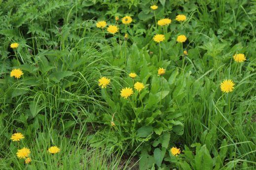 20200822 【八方尾根】高山植物は花盛り-その3_b0013099_17434198.jpg