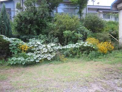 駐車場に花がいっぱい_c0194003_10313356.jpg
