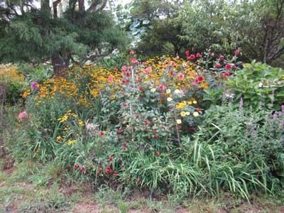 駐車場に花がいっぱい_c0194003_10375112.jpg