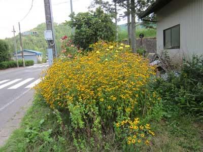 駐車場に花がいっぱい_c0194003_10381070.jpg