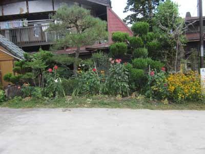 駐車場に花がいっぱい_c0194003_10383549.jpg