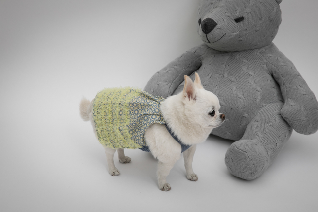☆ louis dog ・ coming soon ☆_d0060413_15041092.jpg