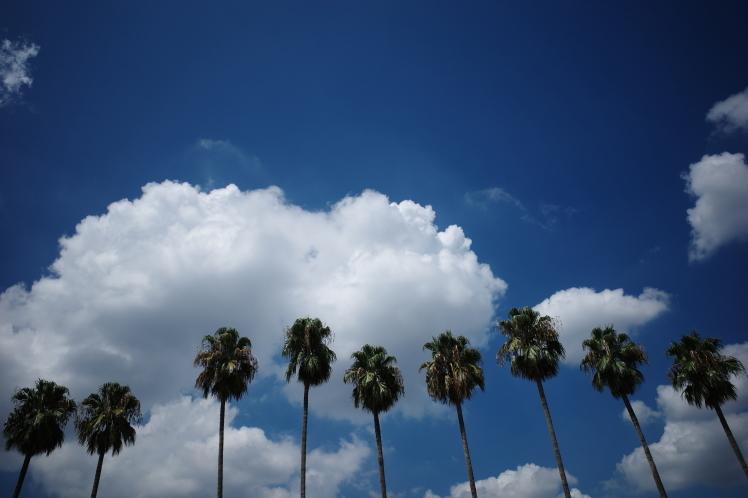 夏の青空_f0209122_17054325.jpg