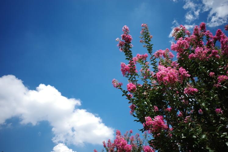 夏の青空_f0209122_17062388.jpg