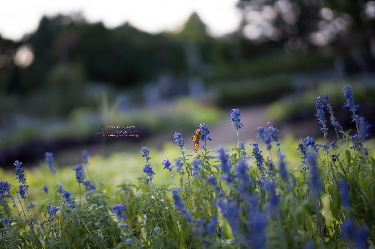 まゝに/8月の公園散策_d0342426_00281299.jpg