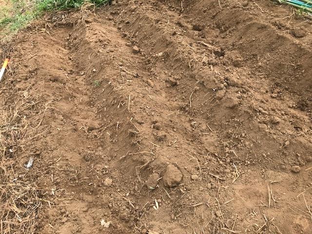 一気に秋ジャガ植え付け、大根など種蒔き8・31_c0014967_16271552.jpg
