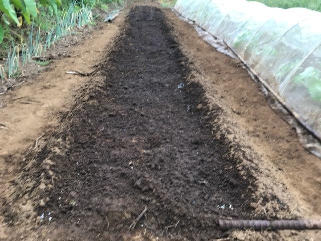 一気に秋ジャガ植え付け、大根など種蒔き8・31_c0014967_16280666.jpg