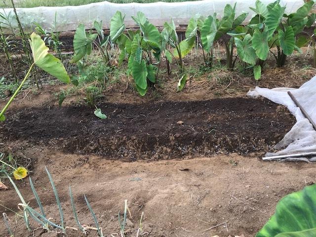 一気に秋ジャガ植え付け、大根など種蒔き8・31_c0014967_16281910.jpg