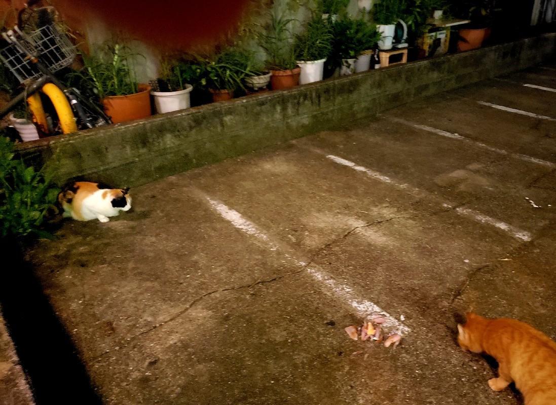 夜の駐輪場_c0193077_20020987.jpg