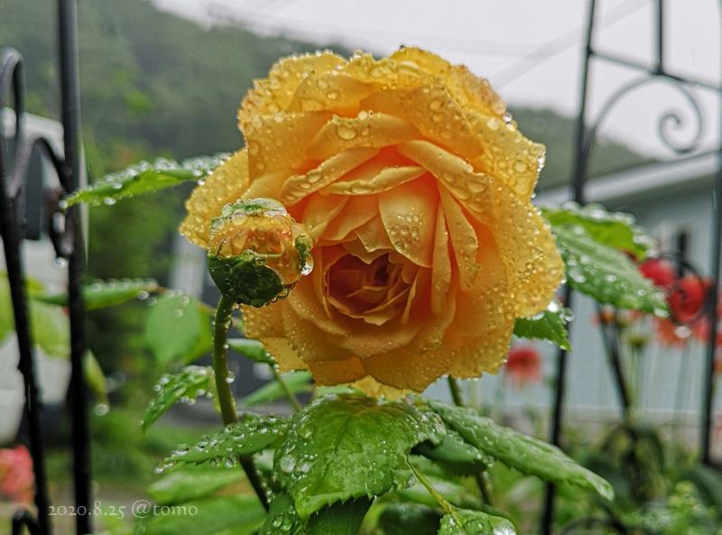 雨降りが気持ちいい。_f0067179_17542486.jpg